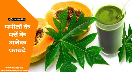 papaya leaves benefits