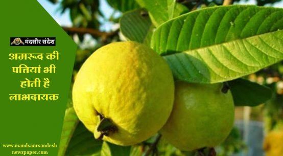 #Guava #Leaves #Health